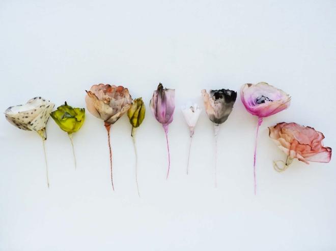 dourthe_flowers6